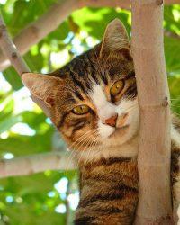 cat-61079_640